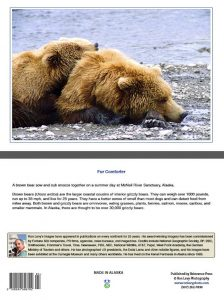 Brown bear-cub-resting-McNeil River-Alaska-Ron Levy Photography