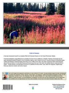 fireweed-flowers-Kenai Peninsula-Alaska-woman-hiker-notecard-Ron Levy Photography