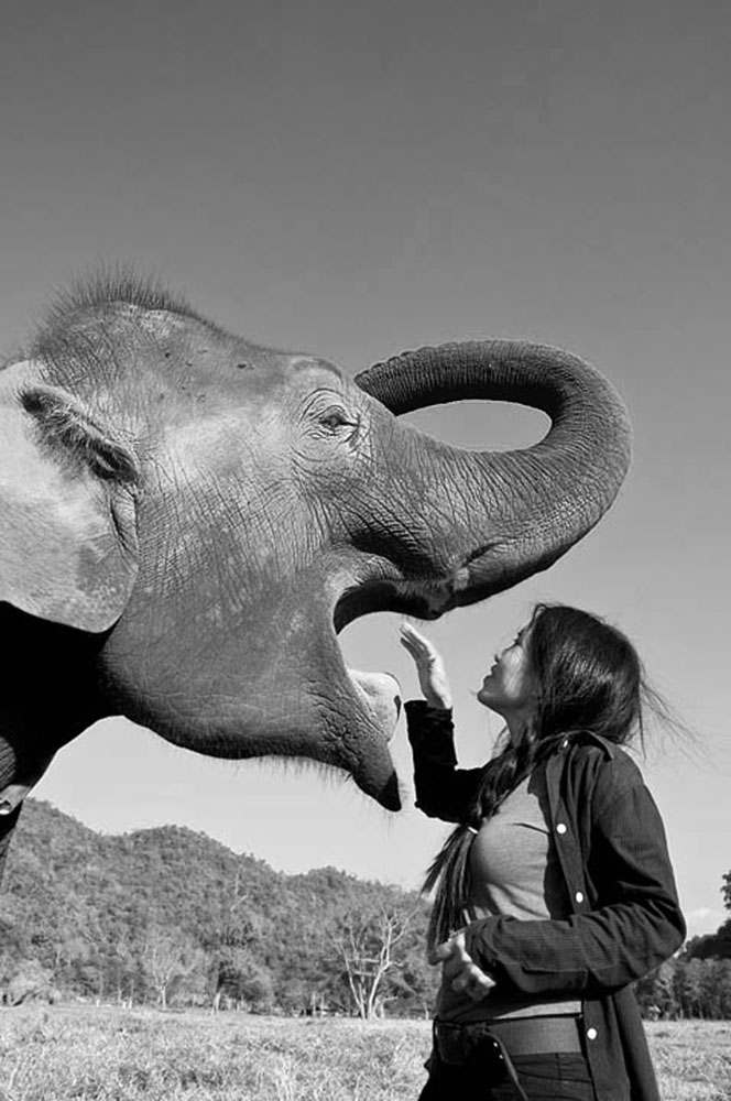 Lek_Elephant_Thailand-BW