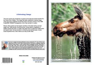 Moose_RefreshingChange-notecard-thirsty-Kenai-River-Alaska-Ron Levy Photography