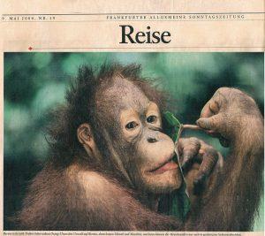Orangutan-Borneo-newspaper-Reise-Germany-Ron Levy Photography