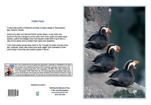 Tufted-puffins-Kachemak Bay-Alaska-Ron Levy Photography