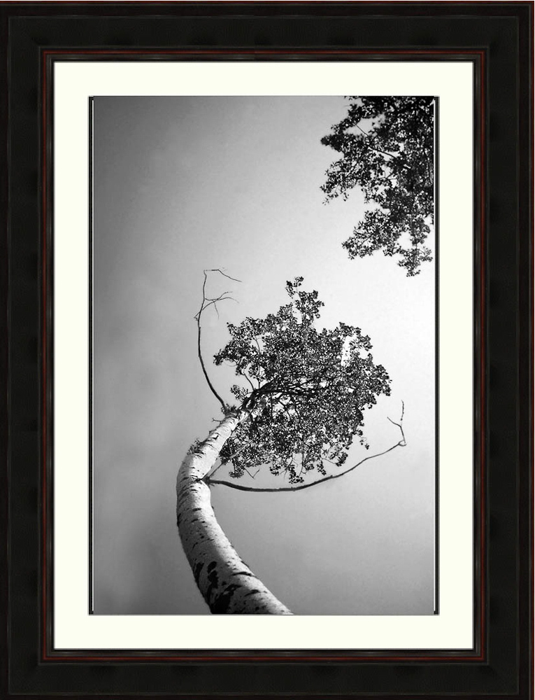 birch-trees-arms-branches-Ron Levy Photography