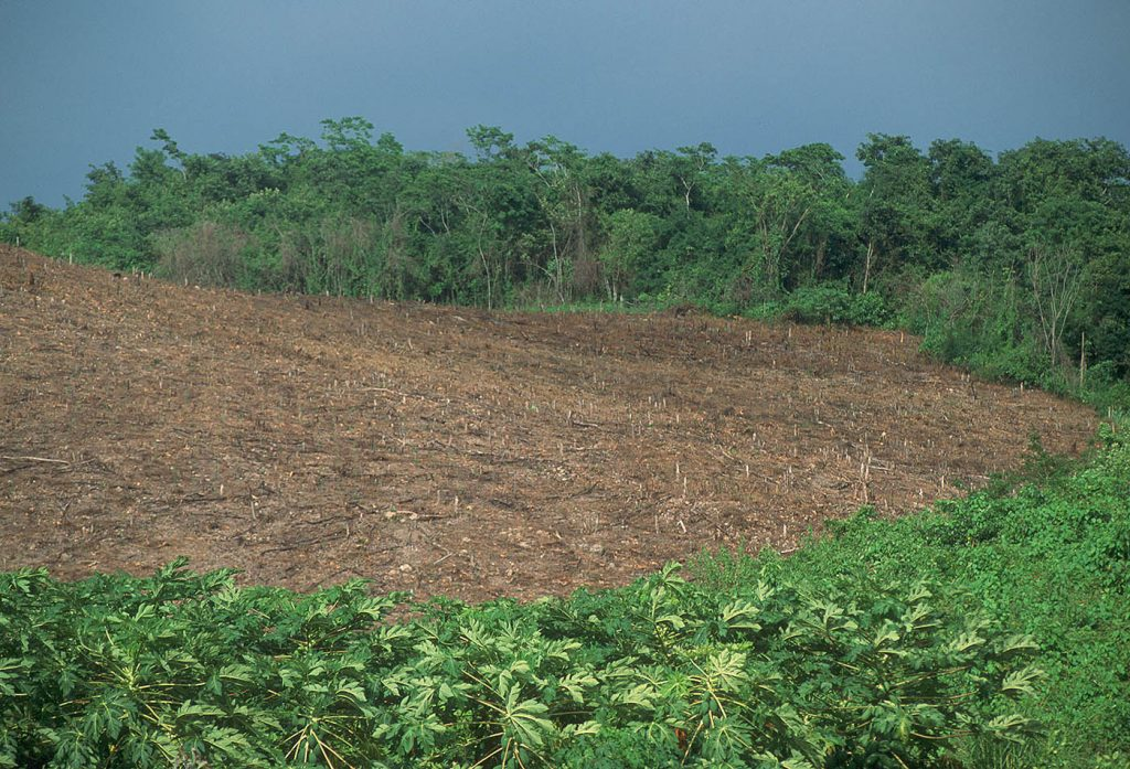 clearcut-rainforest-Tikal-Guatemala-Ron Levy Photography