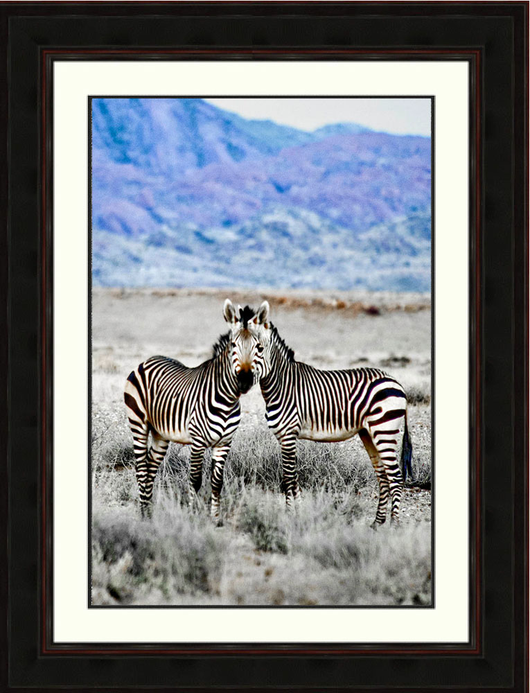 Zebras-eye-to-eye-Namibia-Africa-Ron Levy Photography