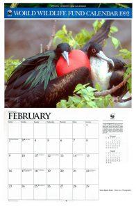 Great frigatebirds-couple-Galapagos, Ecuador-WWF calendar-Ron Levy Photography