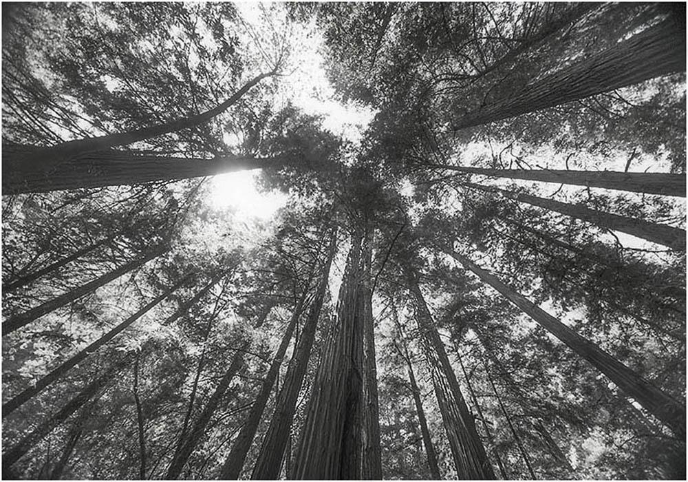 redwoods-sky