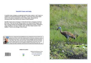 sandhill-crane-baby-Alaska-notecard-Ron Levy Photography