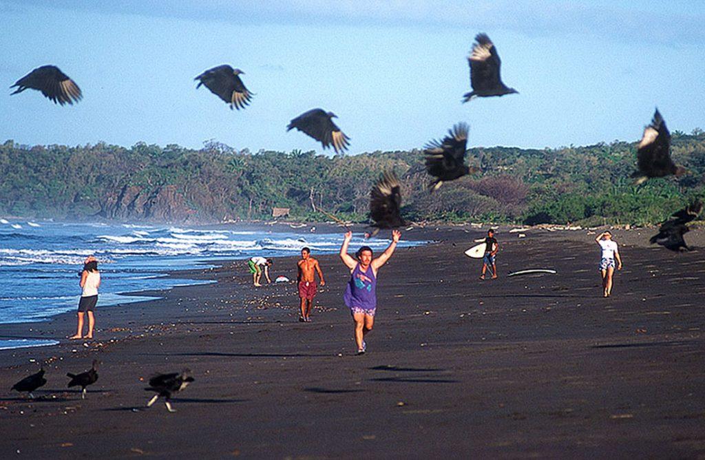 vulturescare-ronlevy-1