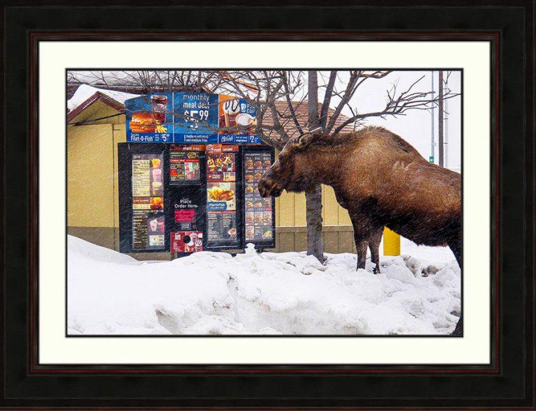 moose-reading-McDonalds menu-Kenai-Alaska-ron Levy Photography