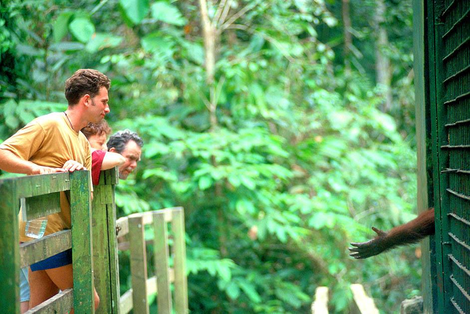 orang-reachingRonLevy
